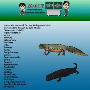 Salamander - Molch Biologie Übungen Lernzielkontrolle