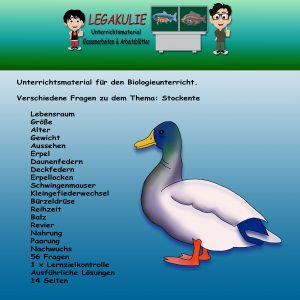 Stockente Biologie Übungsaufgaben Arbeitsblätter PDF
